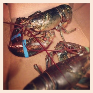 Lobster alive and kicking